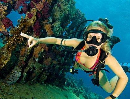 Ocean College PADI Scuba Dive Course-2 Days