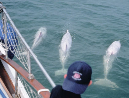 Dolphin Watch Tour - from Hong Kong