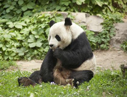 Ancient Beijing, Giant Pandas & New Olympic Stadium