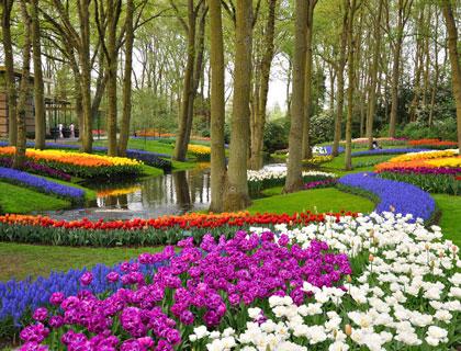 Bulbfields & Keukenhof Gardens Tours