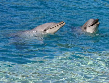 Port Stephens, Nelson Bay Dunes & Dolphins