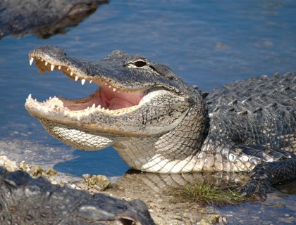 Everglades Airboat Adventure - From Miami
