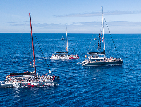 Tenerife Whale Watching Tours - Freebird Catamaran