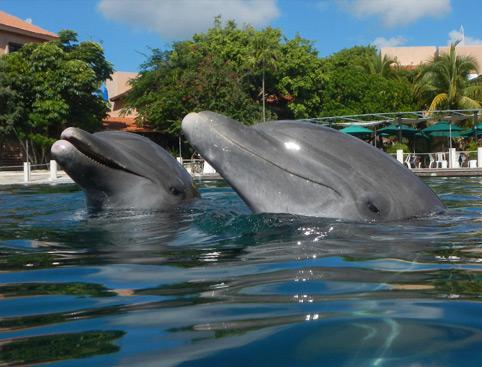 Swim With Dolphins Mayan Riviera - Adventure Swim - Puerto Aventuras