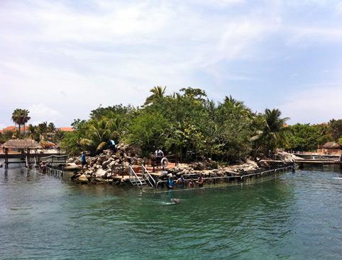 Swim With Dolphins Mayan Riviera - Adventure Swim