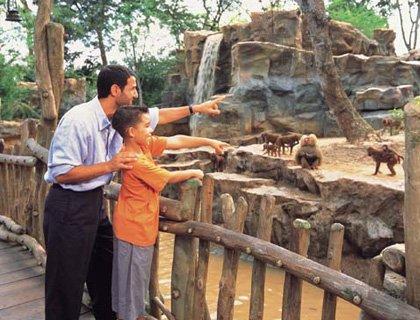 Morning at the Zoo