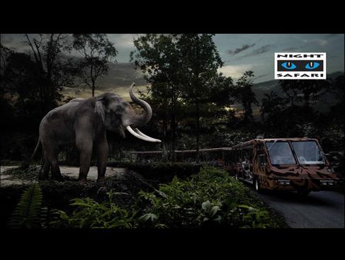 Safari Expedition
