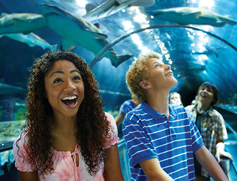 SeaWorld® & Aquatica™ California