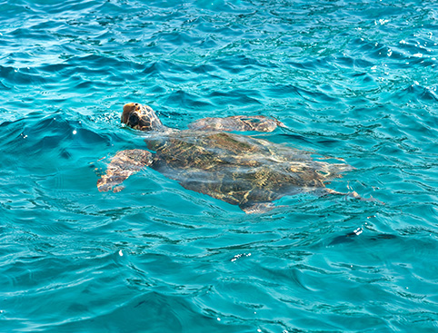 Turtle Trek Tour