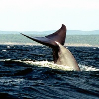 Whale Watching Excursion from Quebec City